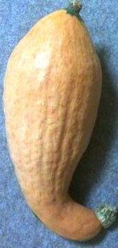 bananakabocha
