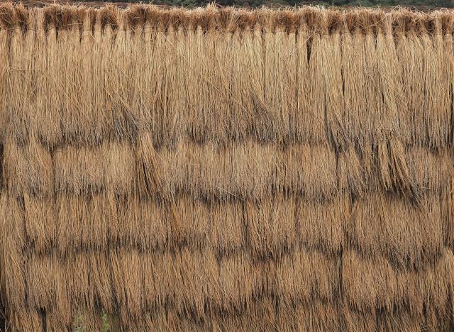新潟 稲作
